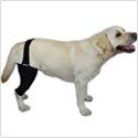 Rodillera para perro con artrosis o lesión de ligamentos cruzados