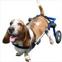 Sillas de ruedas para rehabilitación de perros