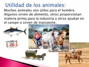 utilidad animales