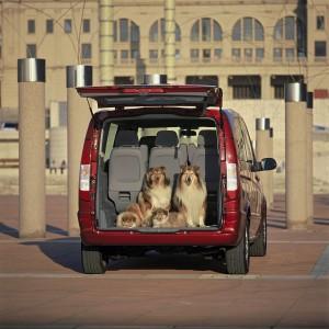 perros-coche_hd_42637